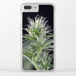 Cannabis Marijuana Flower Early Stage Clear iPhone Case