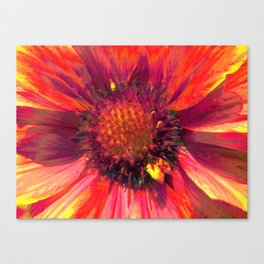 Extreme Indian Blanket Canvas Print