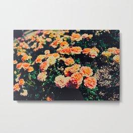 Creamisicle Roses Metal Print