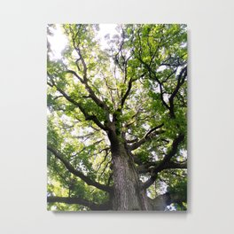 Tall Tree in Summer Metal Print