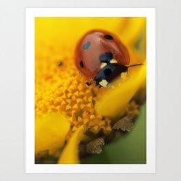 Ladybug, macro, still life, fine art, print, interior design, high quality photo, decor Art Print