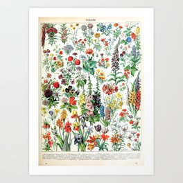 Adolphe Millot - Fleurs A - French vintage poster Art Print