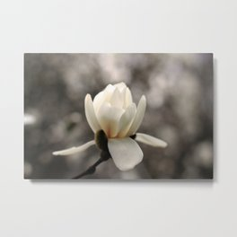 The Fairest of Them All Metal Print