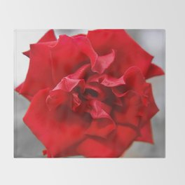 Rose in Red.... Throw Blanket