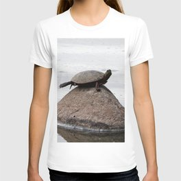Baby Turtle on a Rock T-shirt