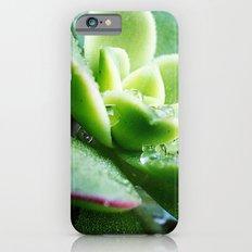 Drops of Dew iPhone 6s Slim Case