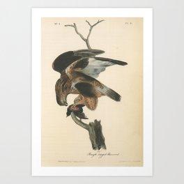 Vintage Print - Birds of America (1840) - Rough-Legged Buzzard Art Print