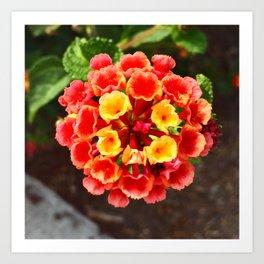 Southern California Flor Art Print