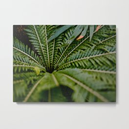 Close Up Of A Fern Green Leaves Spiral Circular Pattern Metal Print