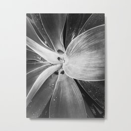 succulent leaves texture in black and white Metal Print