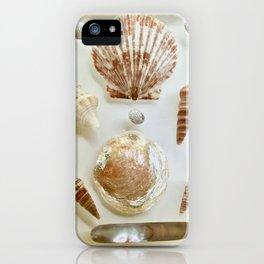 Vintage Seashells in Lucite iPhone Case