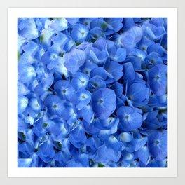 Gorgeous Baby Blue Hydrangeas  Floral Art Art Print