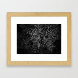 Tasmania Trees From Above Framed Art Print