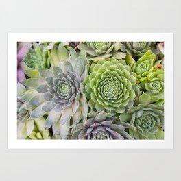 Bountiful Succulents Art Print
