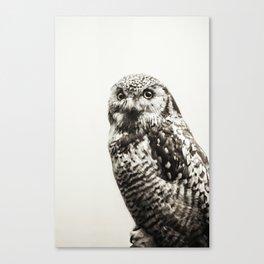 Snowy Owl | Fig. 02 Canvas Print