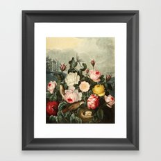 Pink  Red Floral : New Illustration Of The Sexual System Framed Art Print