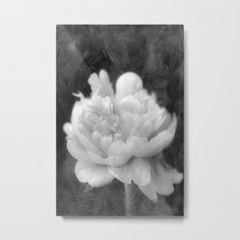 Peony in Black and White Metal Print
