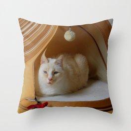 My cat is my zen master Throw Pillow
