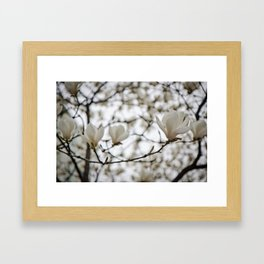 White Blossoms Framed Art Print