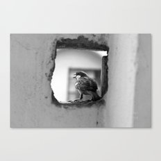 a sparrow Canvas Print