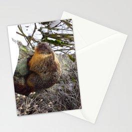 Winter Marmot Stationery Cards