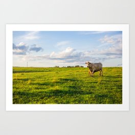 Cows in the Pasture Art Print
