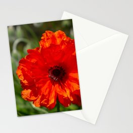 the first poppy Stationery Cards