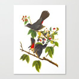 Cat Bird John James Audubon Scientific Illustration Canvas Print