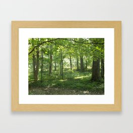 Looking into the Forest Framed Art Print
