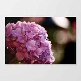 Sunburst in Pink Canvas Print