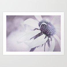 Echinacea purple Art Print
