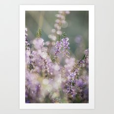 Detail of wild heather growing on a heath with early morning light. Norfolk, UK. Art Print