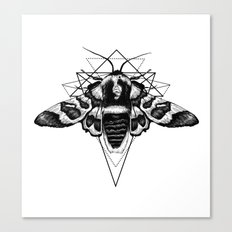 Geometric Moth Canvas Print