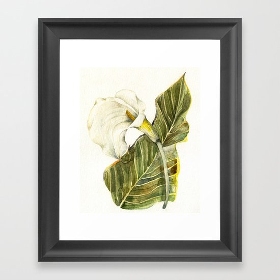 White Calla Lily Framed Art Print