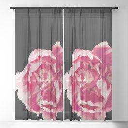 Pink Tulip Flower On A Black Background #decor #society6 #homedecor Sheer Curtain