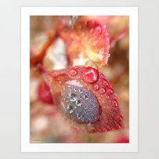 Raindrops on Red Leaves Art Print