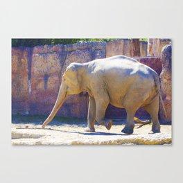 Elephant, Elefant Canvas Print
