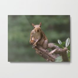 My Nut #3 Metal Print