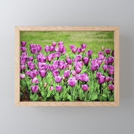 Lilac Tulips Framed Mini Art Print