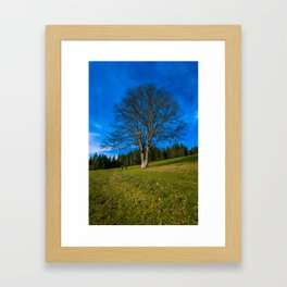 Walk under the tree - Austria Framed Art Print