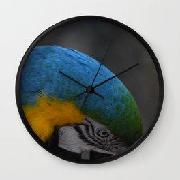 Macaw Mischief #2 captured by JoAnne DiLorenzo Wall Clock