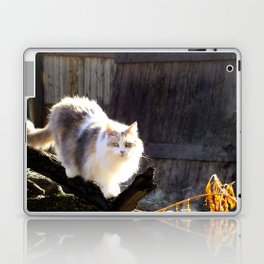 The Beautiful Maine Coon Dilute Calico Laptop & iPad Skin