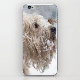 Wheaten Terrier with Robin iPhone Skin
