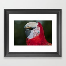 Red and Green Macaw Framed Art Print