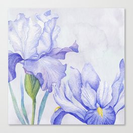 Watercolor Iris Canvas Print