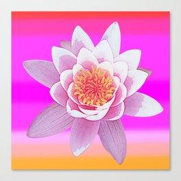 Ninfea Rose Canvas Print