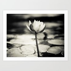 Black and White Cajun Water Lily Art Print