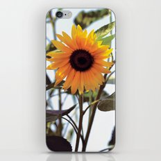 Vintage Sunflower iPhone & iPod Skin