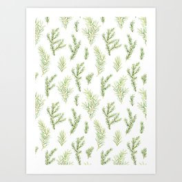 Cristmas watercolor fir and pine twigs Art Print