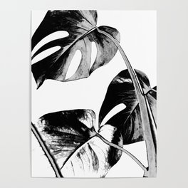 Black monstera leaves watercolor Poster